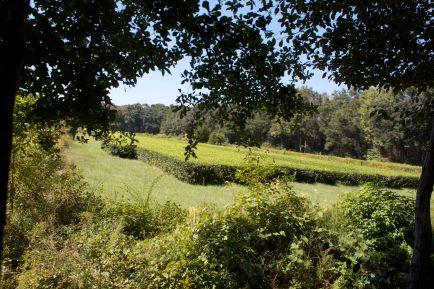 plantationfields3